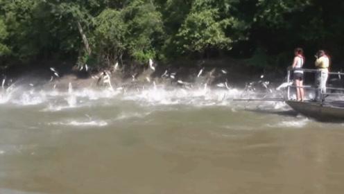 亚洲鲤鱼在国外有多泛滥?轮船经过,水中瞬间炸开了锅!