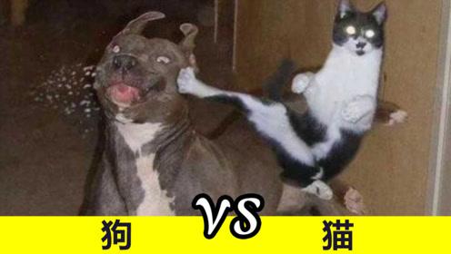 为什么猫和狗一言不合,就要打一架?说出来你哭笑不得