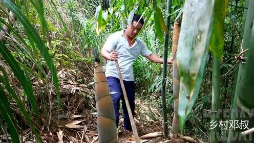自家种的笋长了,去挖几根回来吃,这种笋吃起来不会很苦口感不错