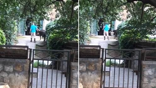 网曝饲养员抽打貘声音响亮吓人 北京动物园做出回应