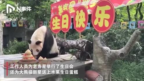 重庆37岁大熊猫奶奶过生日,世界现存最年长,相当于人类百岁