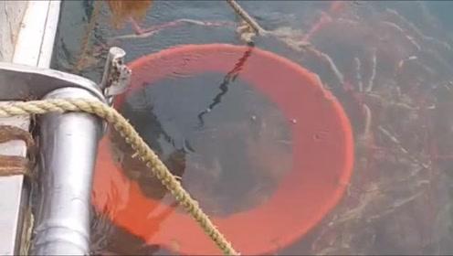 在俄罗斯捕鱼,捞上来的一篓子全是好东西,爽歪歪