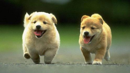 狗狗也能开车!高智商狗狗带你飞!神操作的狗狗!
