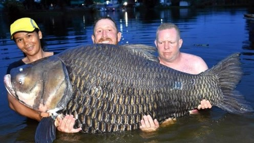 男子钓上罕见巨鲤 搏斗近80分钟将其捕获破世界纪录