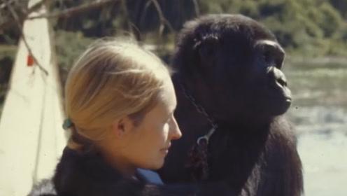 """猩猩和人类也能繁育后代?女科学家""""亲身试验"""",结果出乎意料!"""