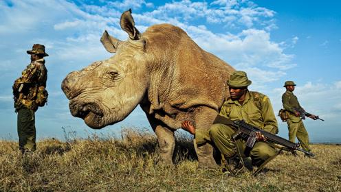 世界上最珍贵动物,40名武警日夜持枪保护,已处于濒临灭绝状态