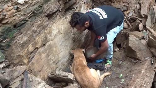 房屋坍塌狗宝宝被埋地下 狗妈妈在一旁急挖土救子感动无数网友