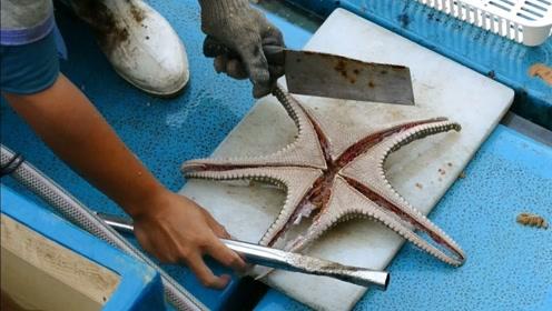 日本渔民捕到一只海星,坐在船上就一刀下去,网友:看得食欲大减