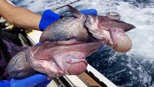 """日本小哥买回来2条""""奇葩鱼"""",嘴巴像人类,吃起来却鲜嫩无比"""