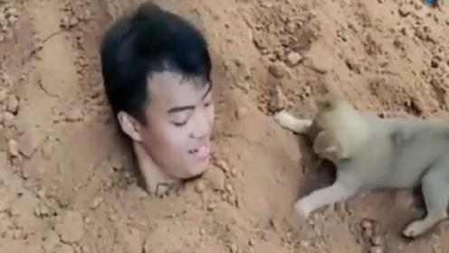 小伙把自己埋在土里,想看狗狗是啥反应,结果让小伙感动到落泪