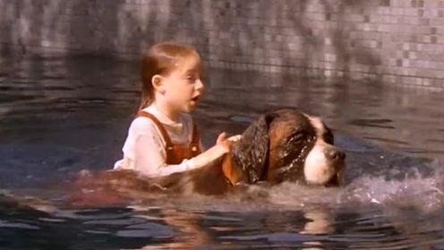 小女孩不小心溺水,狗狗奋勇将其救起,接下来的画面让人感动