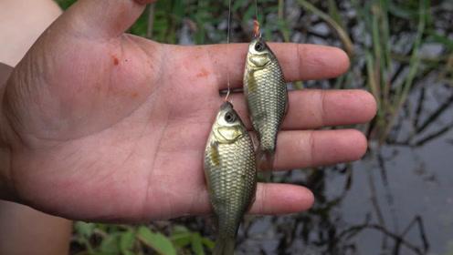 钓鱼:安静的塘角处,鱼星四起,七星漂入水就有动作!