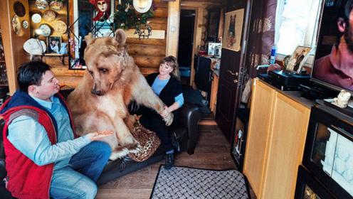 """一对夫妻捡到只小棕熊,养了24年后,结果却没一点""""熊样""""!"""