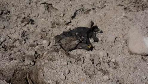 墨西哥井中发现119包碎尸,已识别出44具尸体