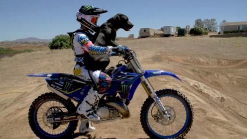 赛车手恶搞狗子,载着一起飞上天空,狗子的反应太真实