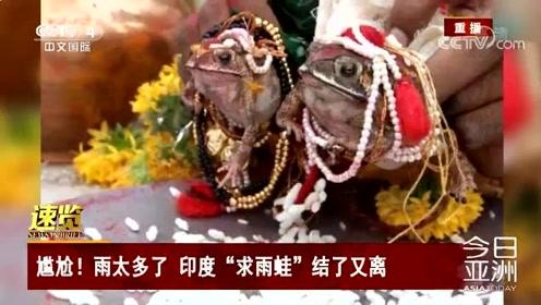"""尴尬!雨太多了 印度""""求雨蛙""""结了又离"""