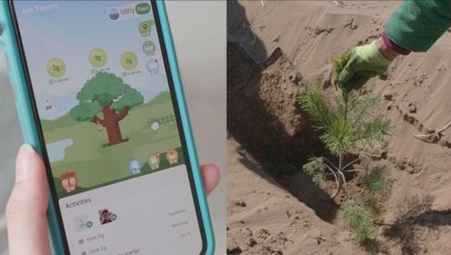 马云精心打造的蚂蚁森林,是不是真的兑现承诺,在沙漠里种树了呢