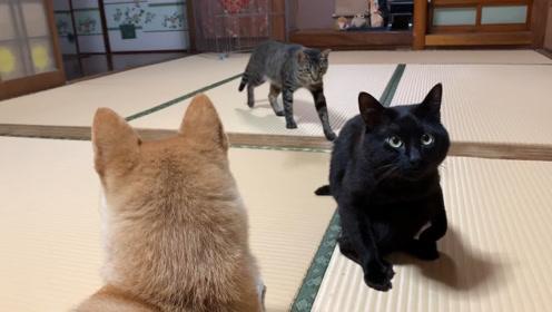 黑猫:只想安静地舔毛,做个美男子,别来烦本喵
