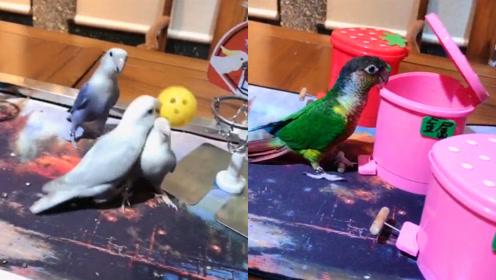 神奇的鹦鹉:能骑车能打球还会垃圾分类,却偏偏忘了怎么飞