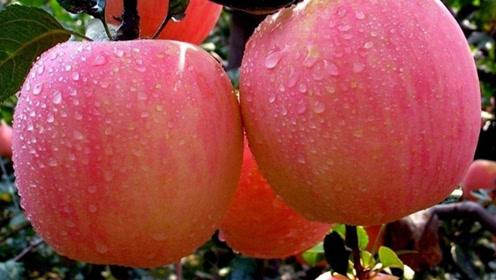 早起空腹吃苹果,坚持一段时间后,3个变化可能不请自来