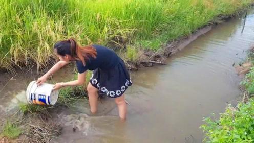 稻田边的一个小水坑,农村姑娘舀水捕鱼,看看这水坑有什么鱼?