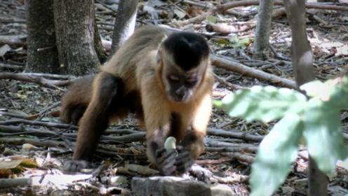 """南亚惊现恐怖""""食人猴"""",进化出语言能力,国家派出军队剿不灭!"""