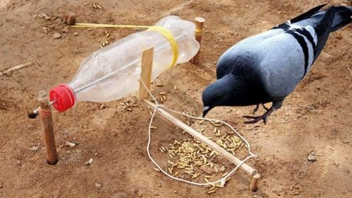 这捕鸟机真牛,用个塑料瓶就自动捕捉野鸟,网友:能否教教我