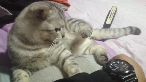 猫咪和主人一起躺床上,这姿势都一模一样,主人:学我干什么?