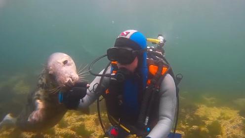 海豹就像孩子一样,向男子索要食物,这么厚的手套都被它咬破了!