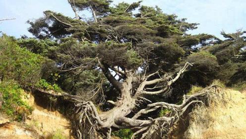 """大树挑战万有引力,竟然""""悬浮""""生长"""