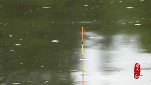 用葡萄钓草鱼专攻大物,你却钓不到?看看问题在哪!