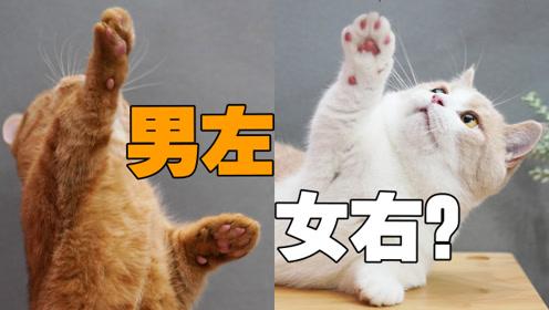 猫咪惯用爪暴露性别,男左女右全物种通用?