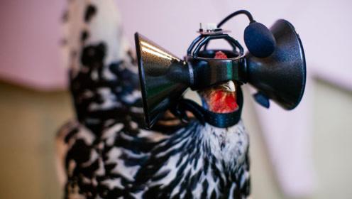 3个VR眼镜的创意应用,第3个给鸡佩戴,能让鸡肉更好吃