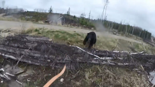男子在野外狩猎,突然遇到一只棕熊,直接朝男子冲了过来
