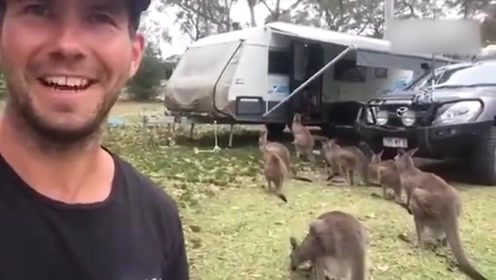 男子给一只袋鼠食物后,第二天打开门,几十只袋鼠排队站在车门口