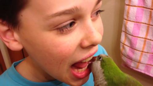 """鹦鹉兼职""""牙医"""",帮小孩拔蛀牙,速度比牙医还快"""