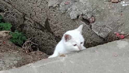 你镜头下的流浪猫是什么样的?这探头探脑的小猫咪,也太可爱了吧