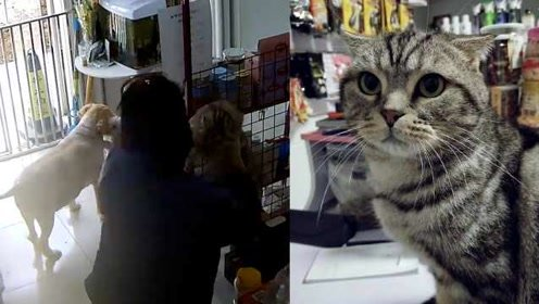 """史上最短""""学徒""""!女孩到宠物店应聘,不到1小时偷钱又偷猫"""