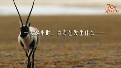 青海24小时高清版