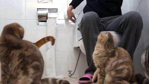 为什么主人上厕所时,猫总想偷窥?理由有点尴尬,还有点温馨!