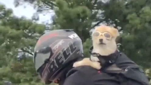 风一样的狗狗,跟着主人游玩的样子,真是太酷雷人!
