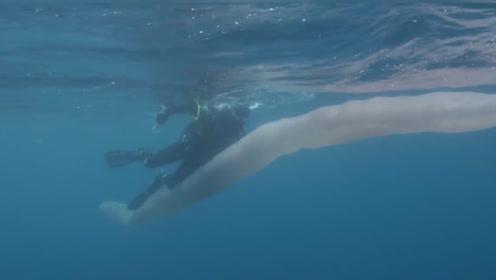 """男子潜水遇9米""""白蛇"""",作死骑上去合照,网友:这是遗照了"""