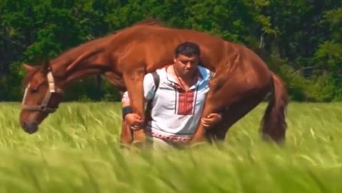 马儿被咬伤动弹不得,下一秒,男子的举动却让人意外了!