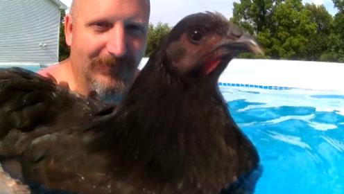鸡不会飞,那它会游泳吗?老外亲自测试,结果让人瞬间傻眼!