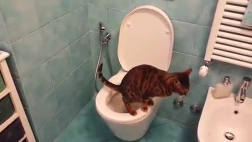 自己上马桶方便,这猫成精了,我怀疑是人扮的