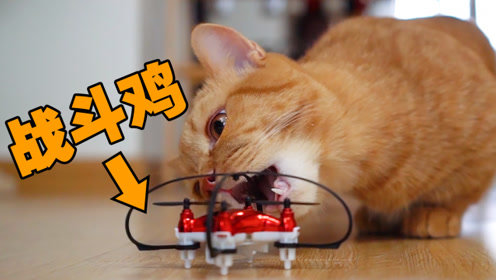当猫遇上无人机:战斗机秒变垃圾,场面一度混乱