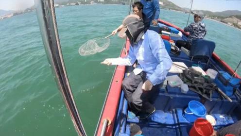 出船手丝钓鱼,4斤的青斑烧手的烂肉梭,解毒成功!