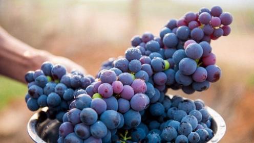 葡萄什么时候吃最好?营养师告诉你