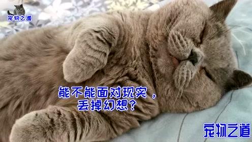 凌晨五点多,铲屎官被吵醒,一看床上崩溃了:床单上长出一堆猫?