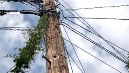 美国的木头电线杆为什么到现在还在使用,这一个原因很关键!